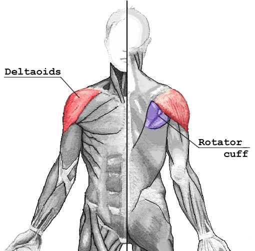 How To Build Rear Deltoid Muscle