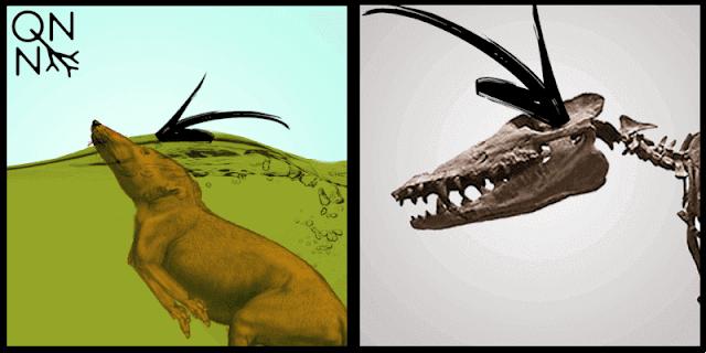 Adaptações do Pakicetus, um ancestral das baleias modernas. - Queimando Neurônios