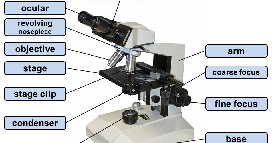 Microscopy-Pictures: Parts and components of a light ...