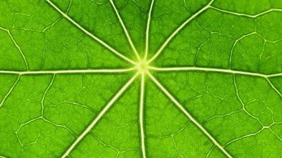 Eficiencia energètica en la fotosíntesi