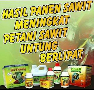Pupuk Nasa untuk Bibit Sawit TBM