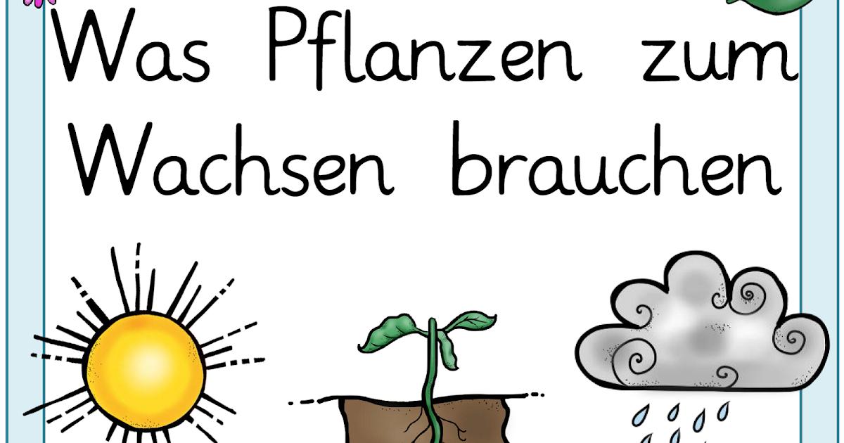 Was Brauchen Pflanzen Zum Wachsen : werniwerkelt material zum pflanzenwachstum ~ Frokenaadalensverden.com Haus und Dekorationen