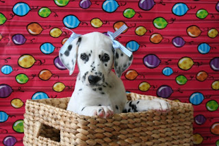 national puppy Day Orlando