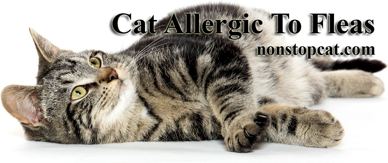 Cat Allergic To Fleas