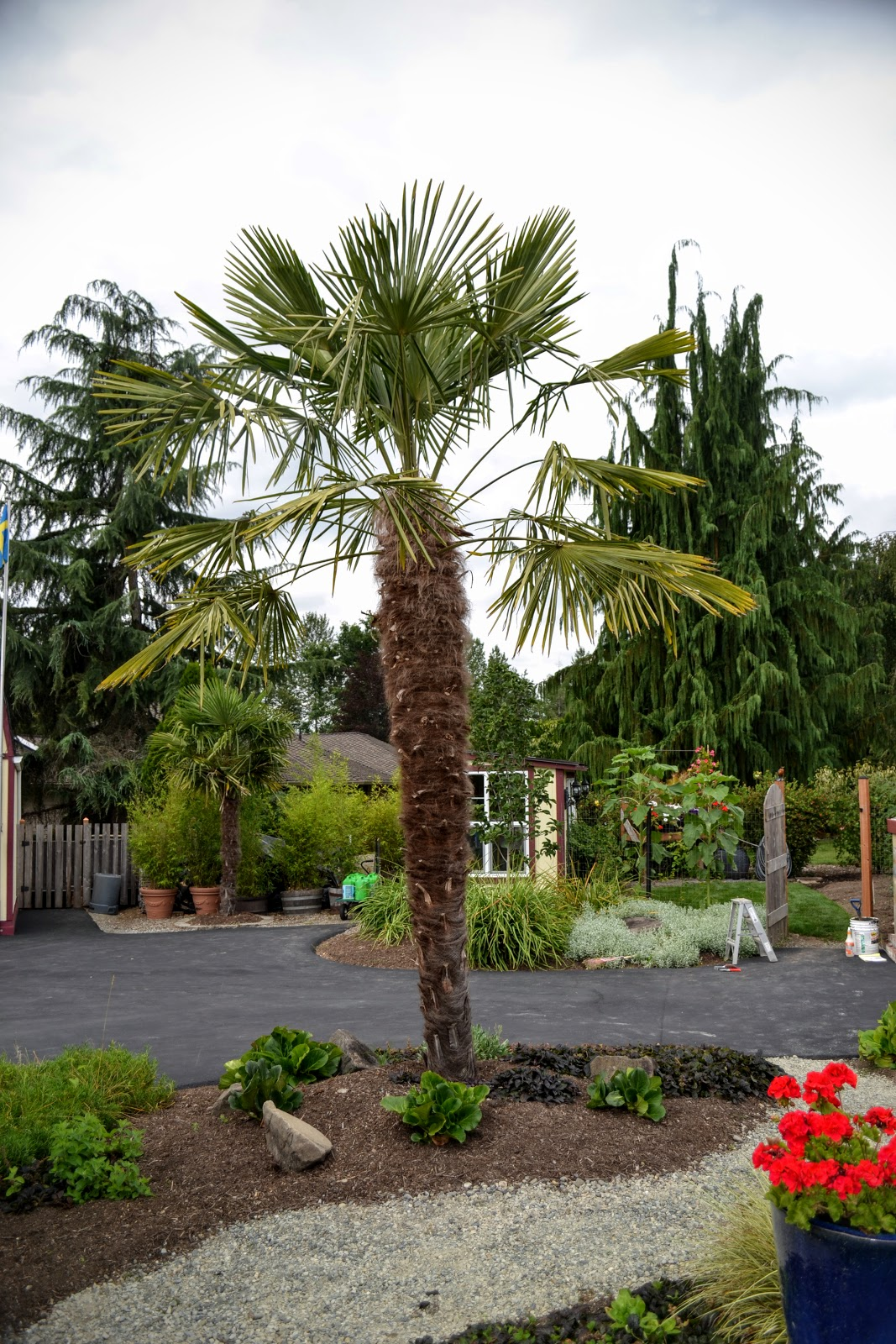 Robins Kitchen Garden City The Outlaw Gardener The Issaquah Garden Of Art Converse