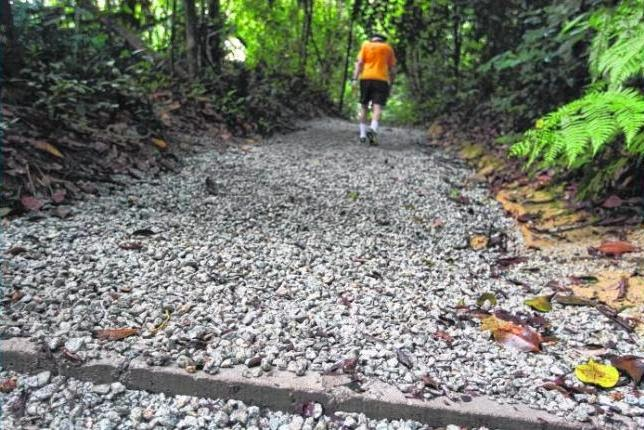 CHIPS OF CONTENTION: Parts of a running trail at MacRitchie Reservoir have been paved with gravel chips, drawing the ire of trail runners who prefer to run on natural terrain.