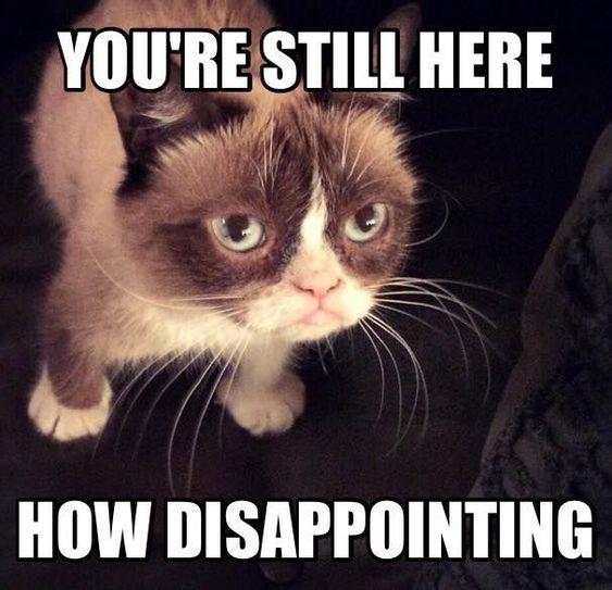 Cute Cat Memes 8