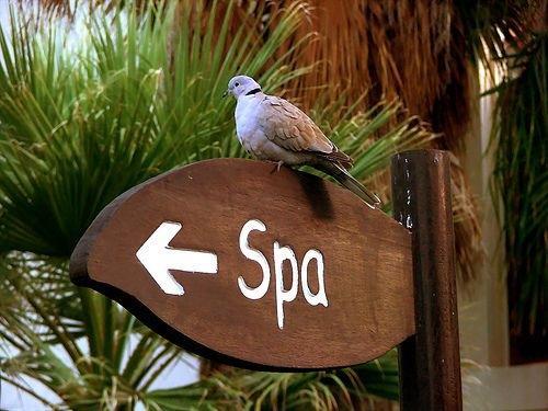 quản lý spa hiệu quả
