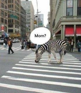 Funny Zebra Mom Joke Photo Image