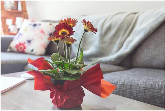 imagem-de-flores-de-amor-e-quadros-decorativos