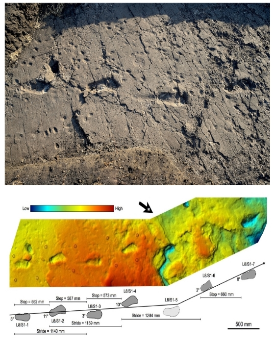 source fidelis t masao et al 2016 trackway l8 with four footprints top relief map of the trackway l8 bottom