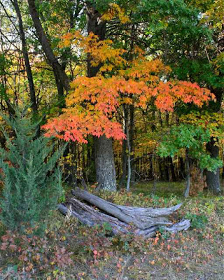 Autumn Cycle