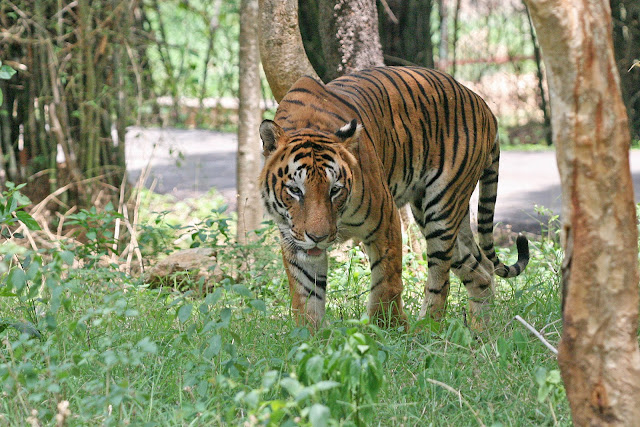 Assam-Wildlife Sanctuaries