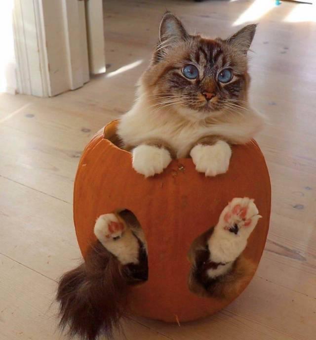 Funny cats - part 336, best funny cat image, cat photos