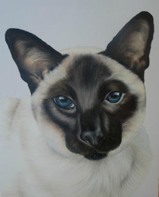 Pet Portrait Siamese Cat