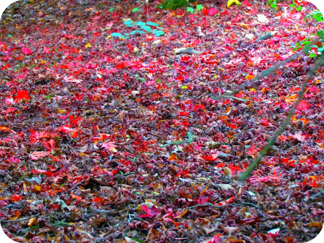 Red carpet of leaves