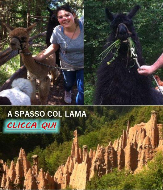 http://vacanzedafavola7.blogspot.it/2016/04/passeggiata-con-i-lama.html