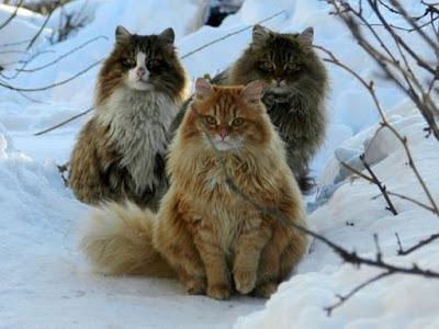 trio de chats drôles