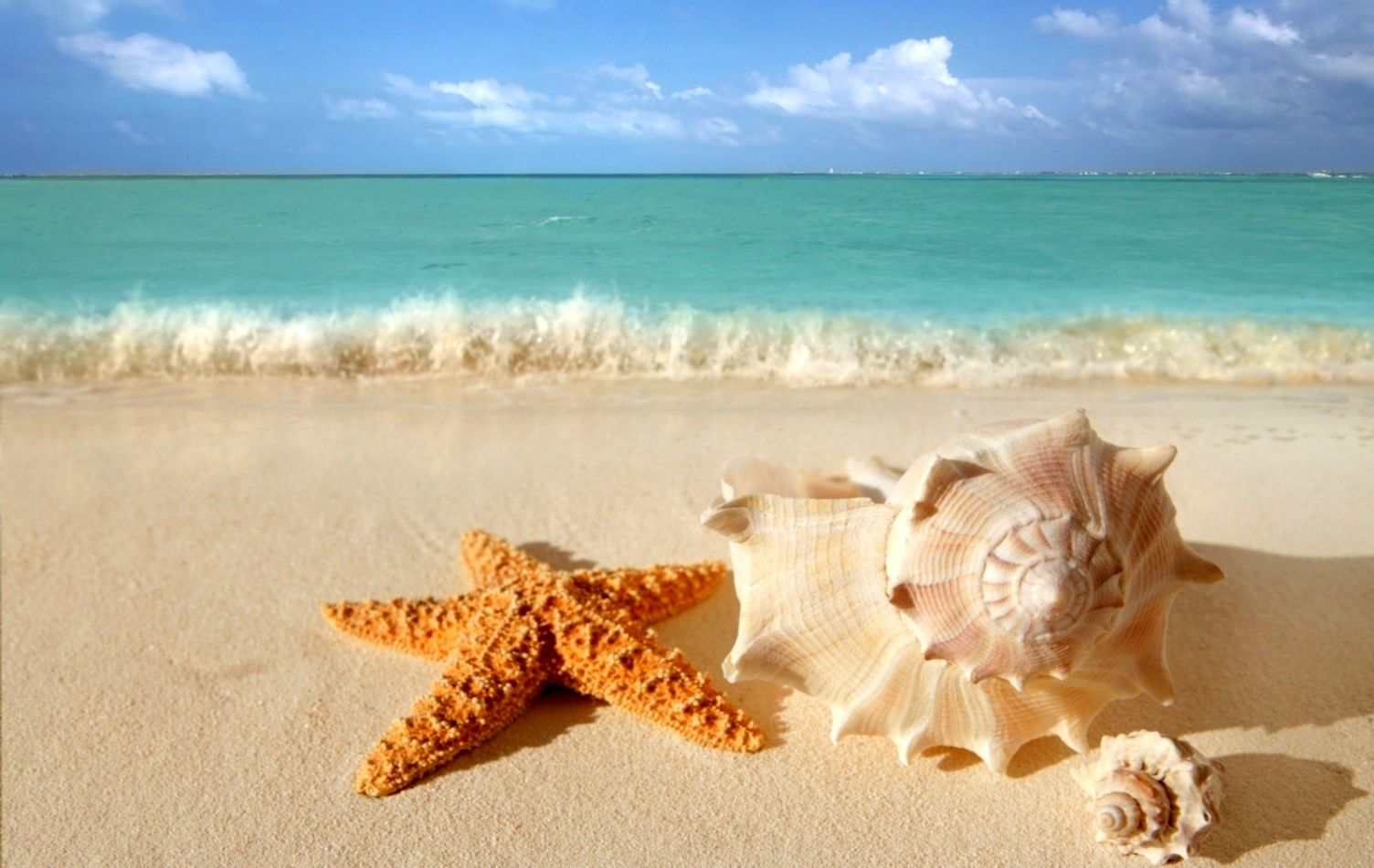 Starfish And Seashells On The Beach Wallpaper Hd Gold