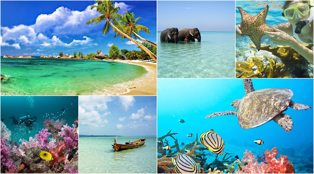 Wildlife of Andaman