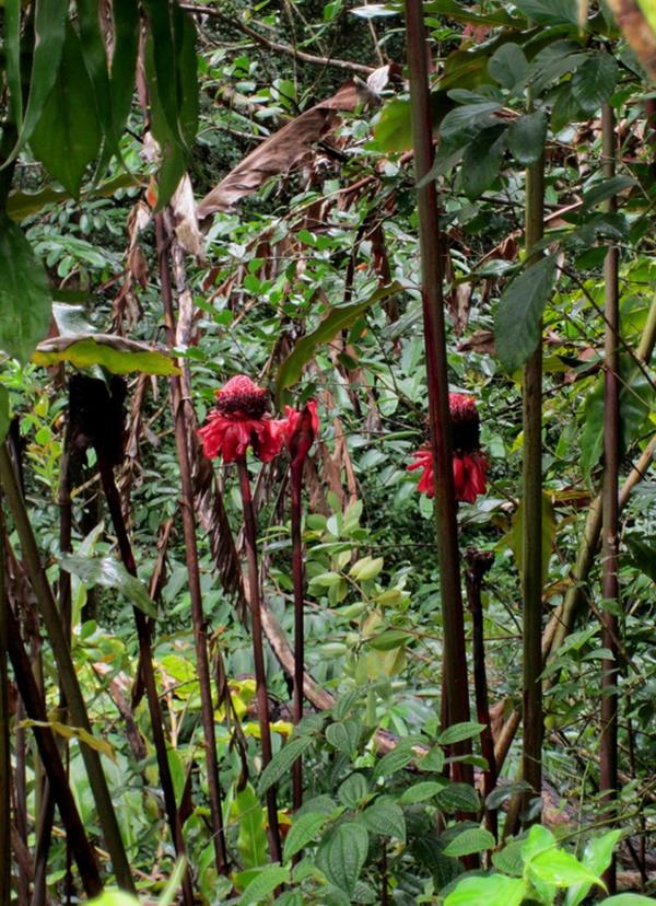 Rain forest medicinal plants