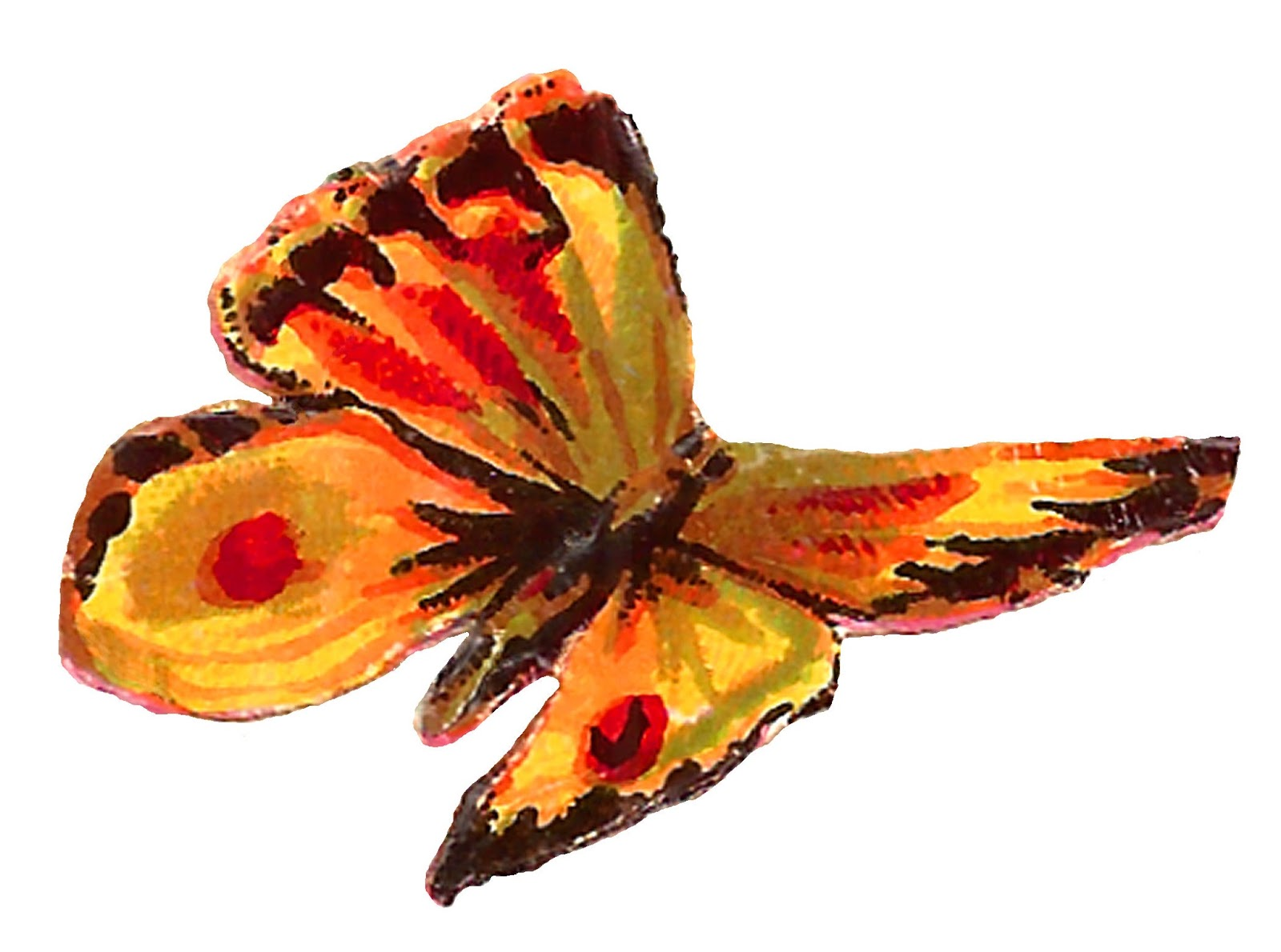 antique images yellow butterfly images free insect clip art