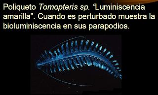 Qué es la bioluminiscencia