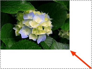 Cara Mengubah Ukuran Foto dengan Adobe Illustrator