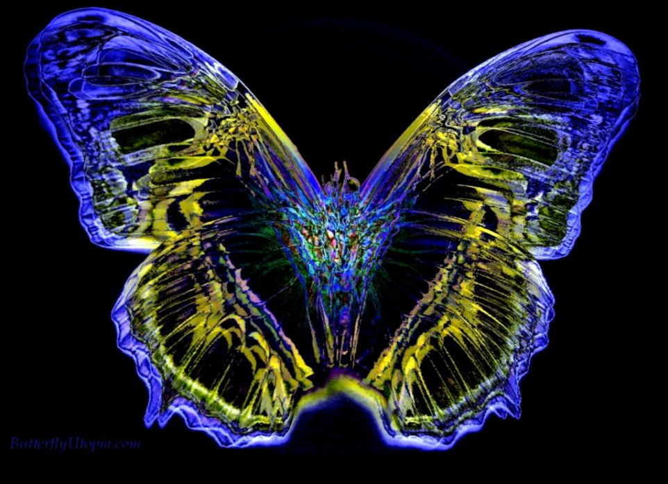 Free Butterfly Wallpaper for Computer