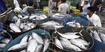 Ambon, Malukupost.com - Harga ikan cakalang segar maupun ikan sembung jenis momar dan kawalinya yang ditawarkan para pedagang di lokasi pasar Arumbai kawasan pasar Mardika Kota Ambon kini mulai bergerak turun. Hasil pantauan di pasar Arumbai pasar Mardika, Sabtu (9/6), para pedagang ikan segar jenis cakalang mulai mematok harga Rp25.000 hingga Rp30.000/ekor atau turun dari sebelumnya Rp55.000/ekor tergantung ukuran, bahkan ada pedagang yang berani menurunkan harga menjadi Rp20.000/ekor.