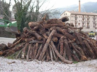 Sant Antoni 2009 fotos de Lluis Belsa 13
