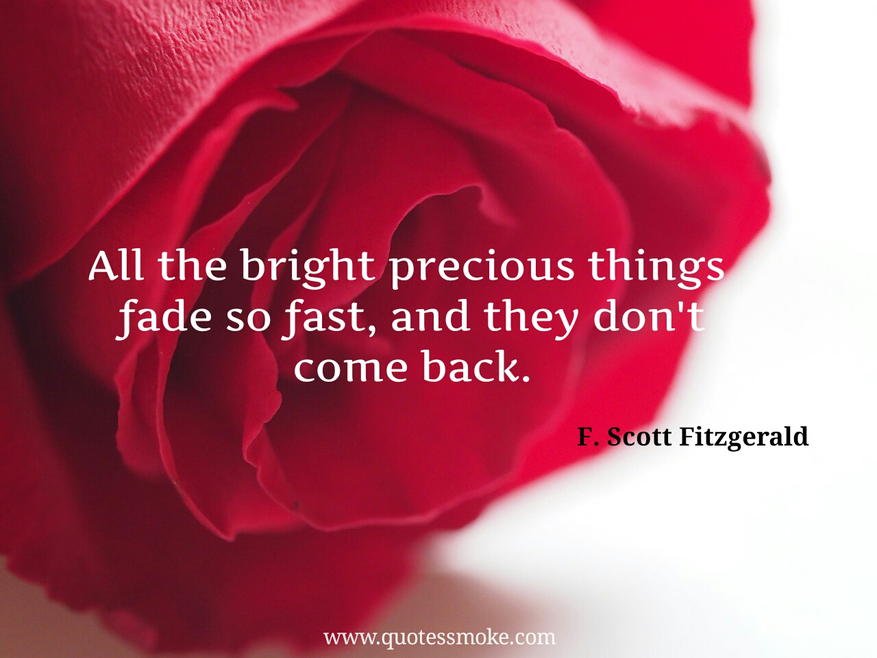 Garden Love Quotes 25 Best F Scott Fitzgerald Love Quotes To Look Into You And Life