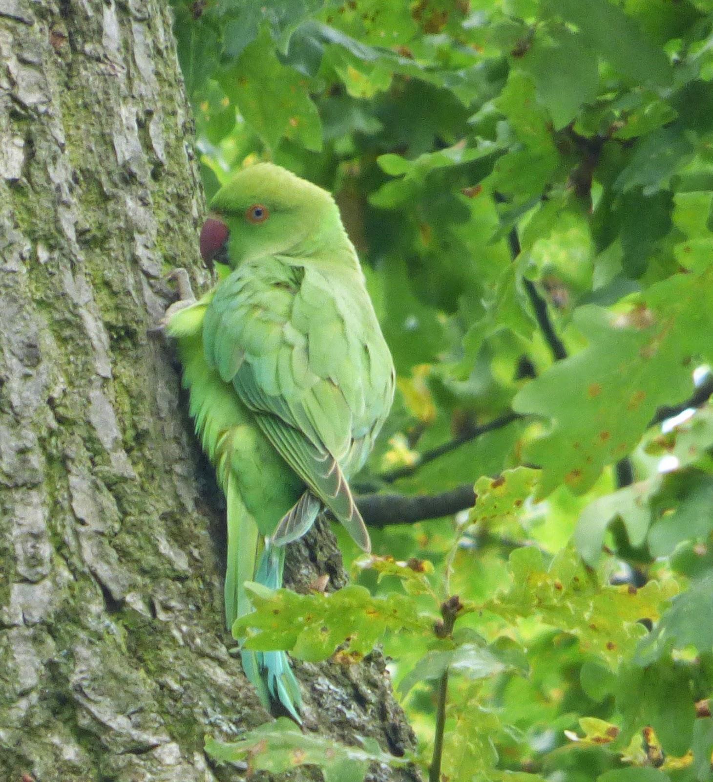 Gregor S Bird And Mammal Blog September
