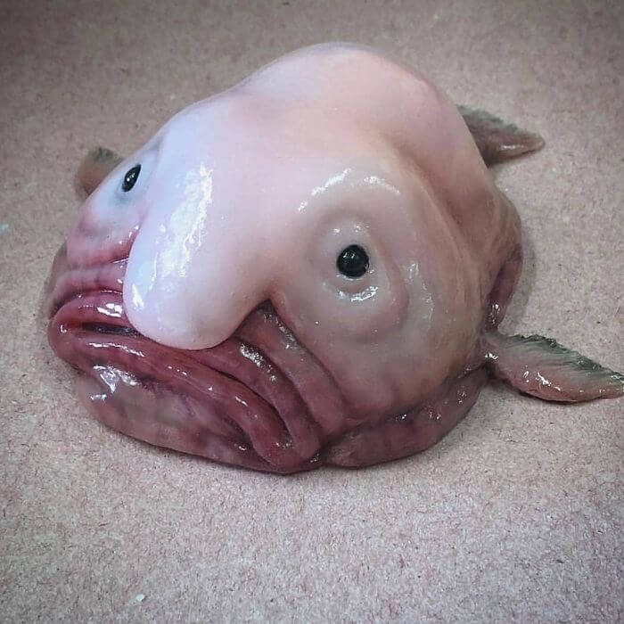 These Pictures Of Creatures Of The Deep Sea Are Both The Most Horrifying And Amazing Things We Have Ever Seen