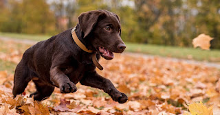 5 Common Exercise And Therapy Strategies For Dogs