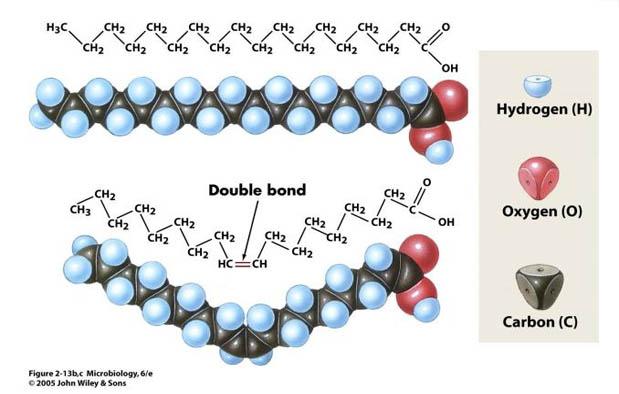 Fungsi Lemak dalam Komponen Kimia Sel