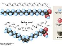 Mengenal Fungsi Lemak dalam Komponen Kimia Sel