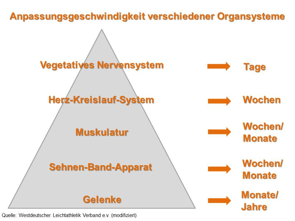 Ausgezeichnet Organsysteme Arbeitsblatt Antworten Ideen - Mathe ...