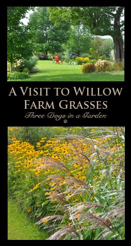 A Visit to Willow Farm Grasses
