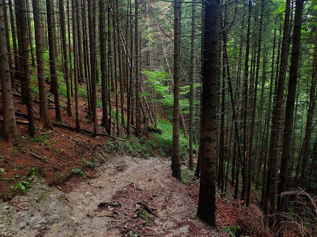Zejście Doliną Białego (okolice Igły)