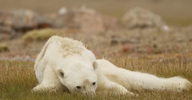 Este video trágico te hará pensar detenidamente tu contribución al calentamiento global