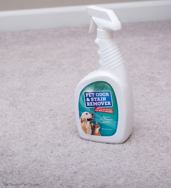 Using OmegaPet carpet cleaner to clean pet stains