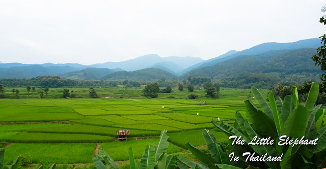 Green rice-fields in Nan - Thailand