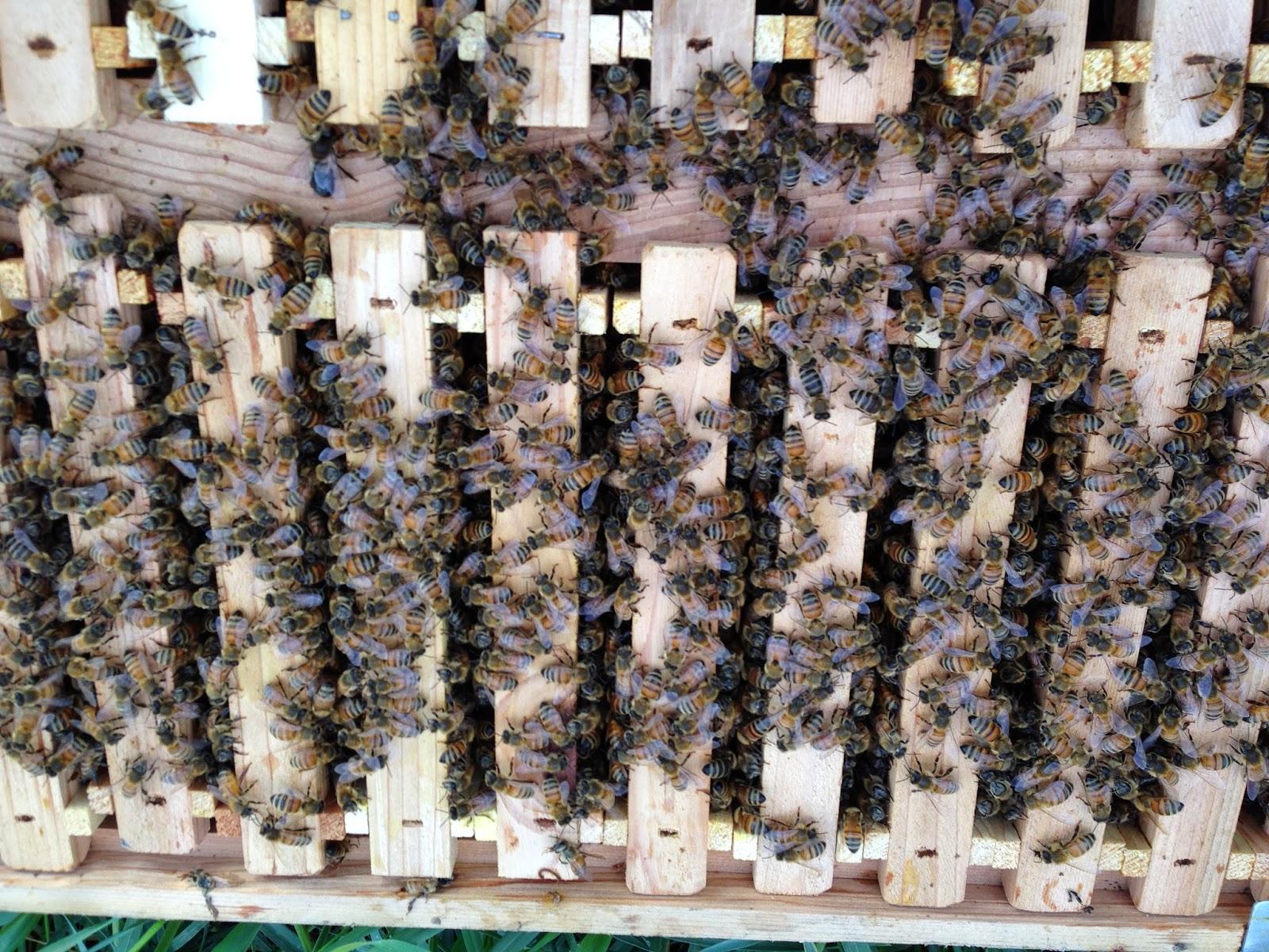JoyFan Harvest Bee Hive Harvest Bee Hive pollination Beekeeping King Box for Queen Breeding Tool Beekeeping Equipment