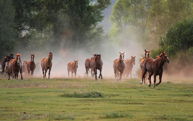 Groep hard rennende paarden