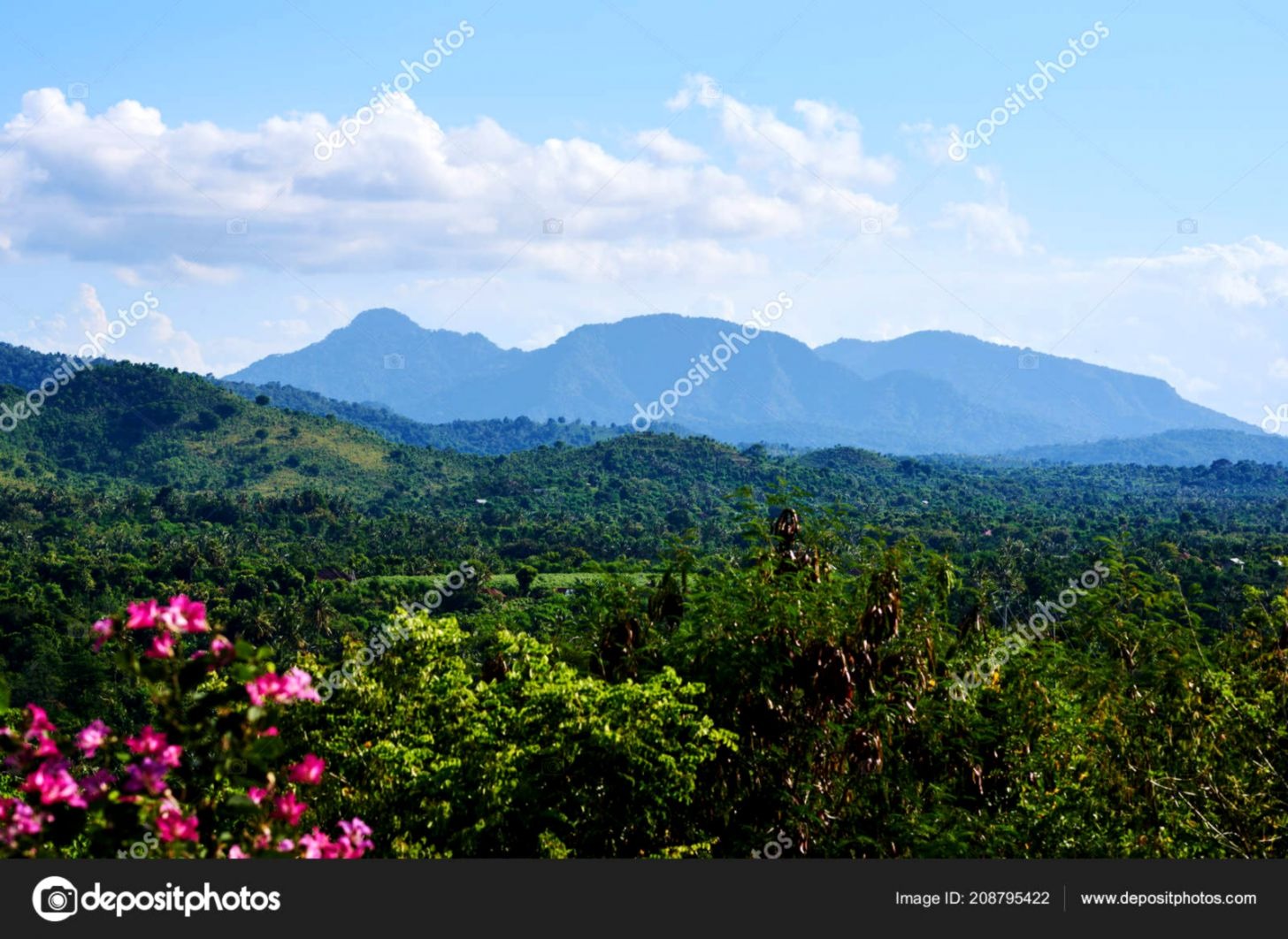 Flowers Mountain Slopes Background Beautiful Sunny Day View