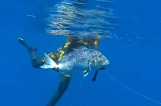 Παγκόσμιο ρεκόρ στο ψάρεμα συναγρίδας από ψαροτουφεκά στη Ζάκυνθο (βίντεο)