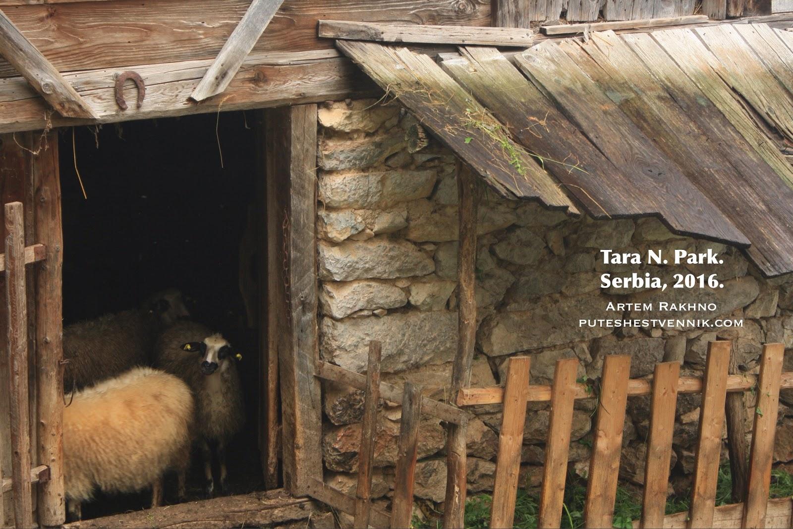 Овчарня в Сербии