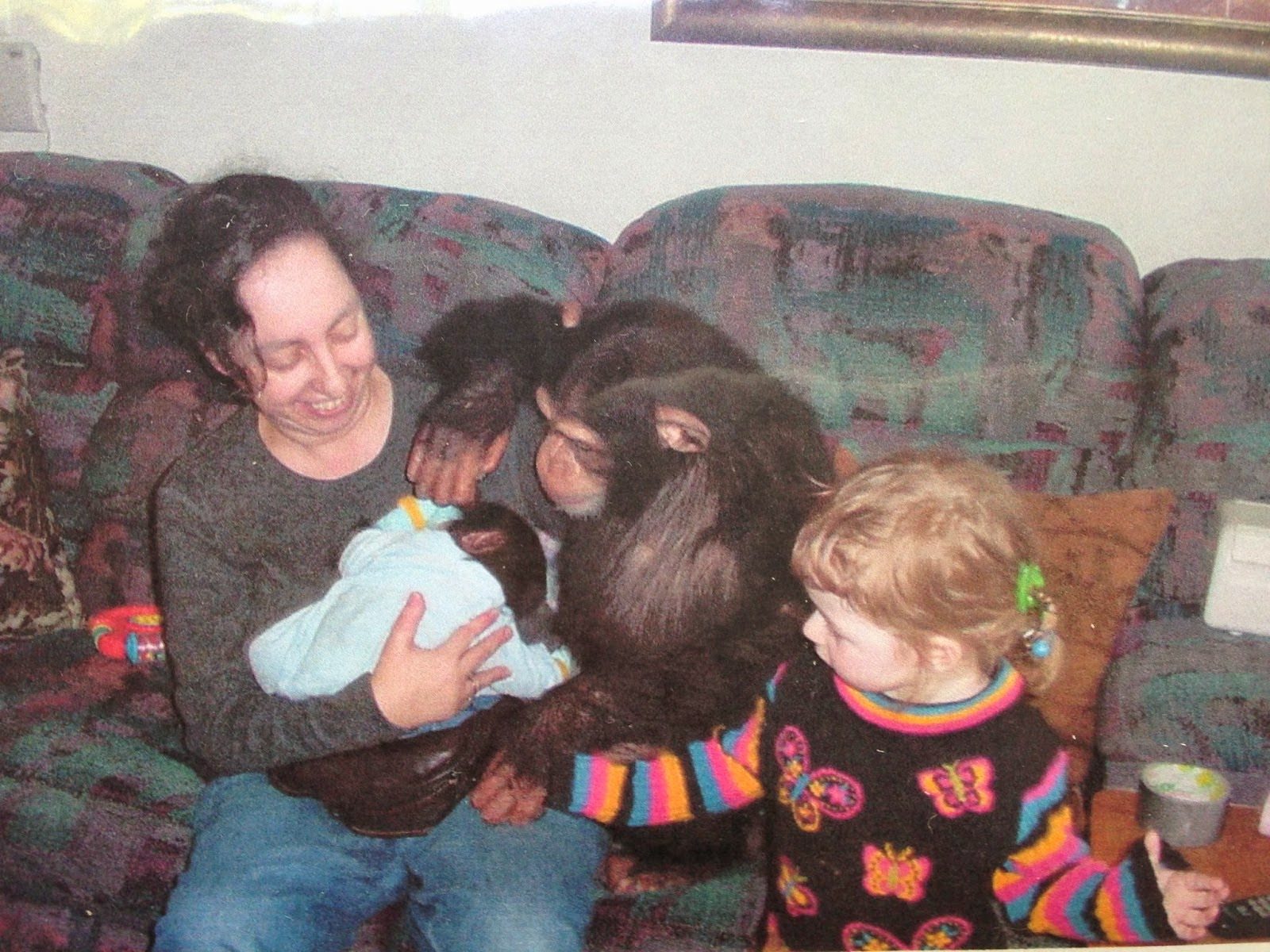 Chimp Trainer's Daughter: What happens to baby pet chimp when he