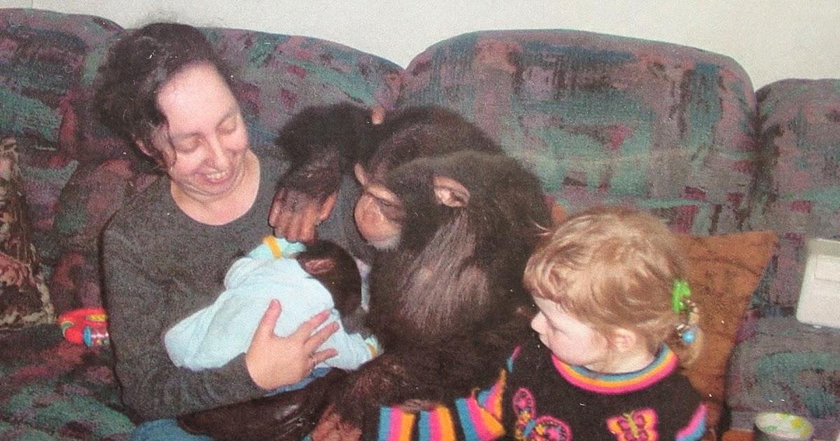 Chimp Trainer's Daughter: What happens to baby pet chimp